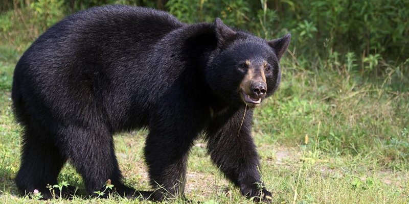 BEARS KNOW NO BOUNDARIES – SECURE WASTE AND ATTRACTANTS